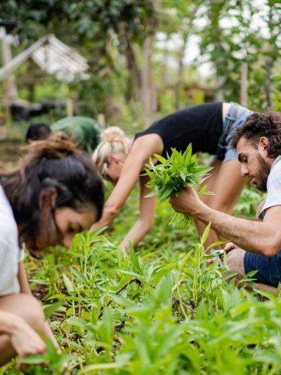 Permaculture workshops & retreats